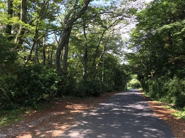 箱根の山道