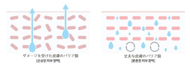 イニスフリー水分クリームのバリア膜